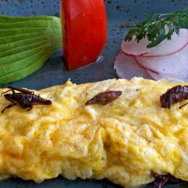 omelette chapulines